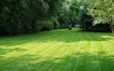 Important Aspects of Lawn Service